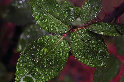 Photograph - After Rain  by Dragan Kudjerski