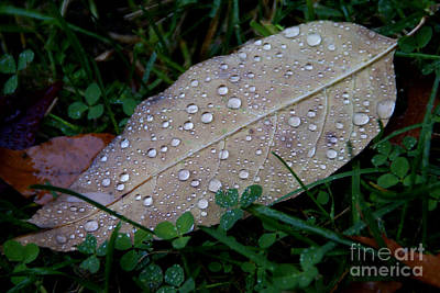 Photograph - After The Autumn Rain by Linda Shafer