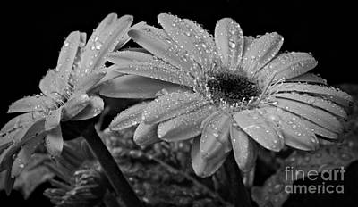 Photograph - After The Rain Bw by Chalet Roome-Rigdon