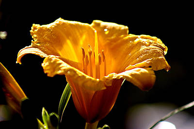 Photograph - After The Rain Flower 1 by Mark Russell