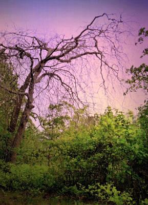 Whalen Photograph - After The Rain by Jim Whalen