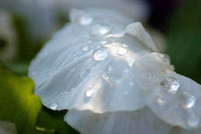 Photograph - After The Rain by Judy Salcedo