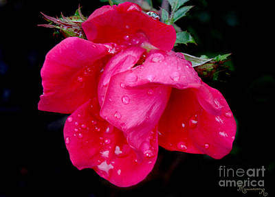 Photograph - After The Rain by Mariarosa Rockefeller