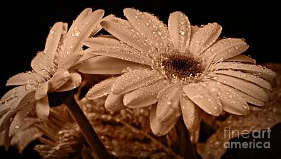 Photograph - After The Rain Sepia by Chalet Roome-Rigdon
