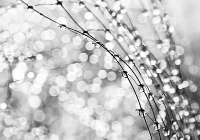 Water Drops Photograph - After The Rain by Theresa Tahara