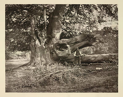 Nature Study Photograph - After The Storm by British Library