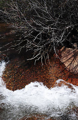 After The Thaw Print by The Forests Edge Photography - Diane Sandoval