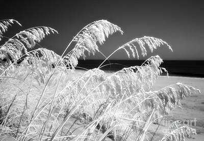 Photograph - Afterglow I by Dan Carmichael