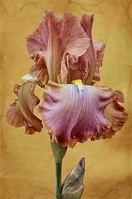 Blooming Digital Art - Afternoon Delight - 1 by Nikolyn McDonald