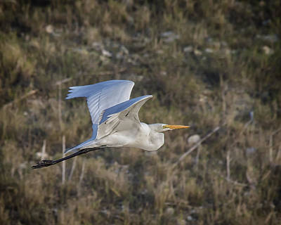 Photograph - Afternoon Flight by Gary Neiss