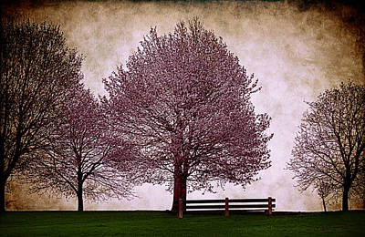 Photograph - Afternoon In The Park by Milena Ilieva