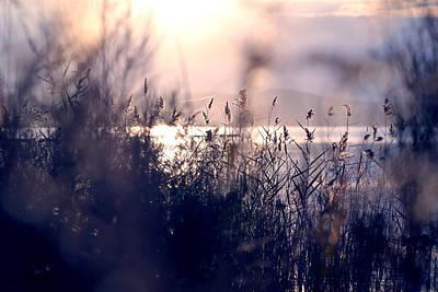 Beata Photograph - Afternoon Magic by Beata  Czyzowska Young