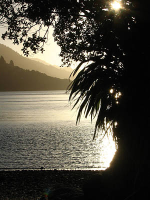 Photograph - Afternoon Sun In Marlborough Sounds by Amber Nissen