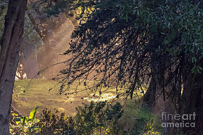 Photograph - Afternoon Sunrays by Kate Brown