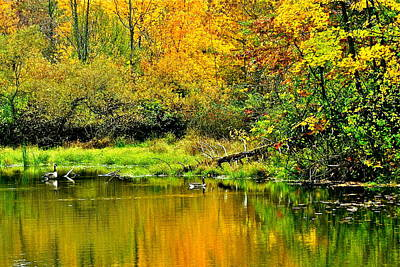 Willow Lake Photograph - Afternoon Swim by Frozen in Time Fine Art Photography