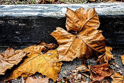 Photograph - Against The Curb by Christopher Holmes