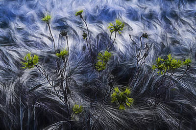 Cornfields Photograph - Against The Wind by Joachim G Pinkawa