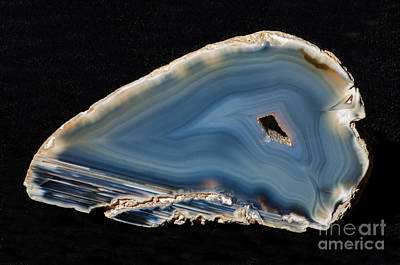 Inorganic Solid Photograph - Agatized Fossil Coral by Millard H. Sharp