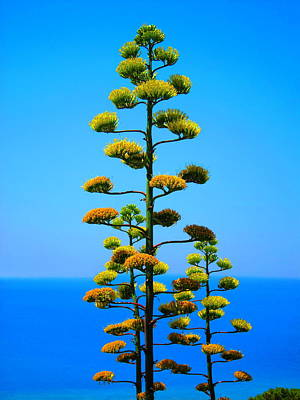 Mediterranean Sea Photograph - Agave by Andreas Thust