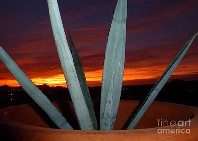 Photograph - Agave At Sunset by Barbie Corbett-Newmin