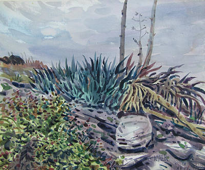 Agave Art Print by Donald Maier