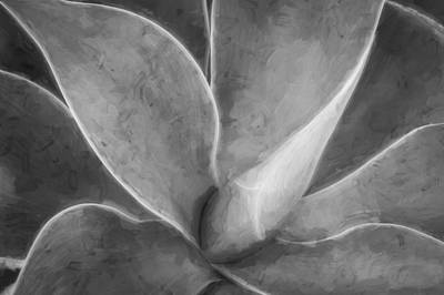 Photograph - Agave Leaves Painted Bw  by Rich Franco
