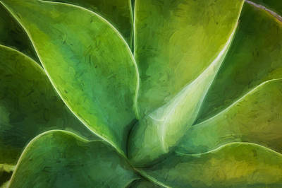 Photograph - Agave Leaves Painted  by Rich Franco