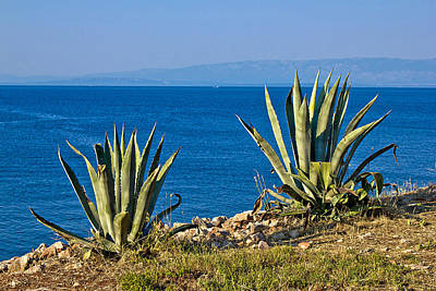 Photograph - Agave Plants By The Sea by Brch Photography