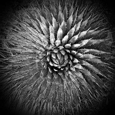 Agave Spikes Black And White Art Print by Alan Socolik