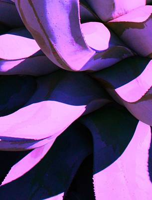 Art Print featuring the photograph Agave by Steve Godleski