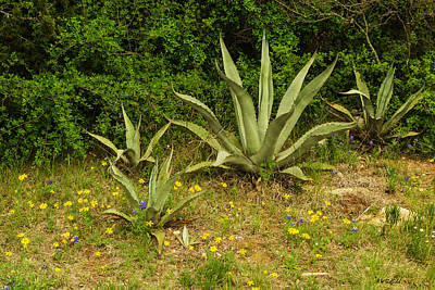 Photograph - Agave With Wildflowers by Allen Sheffield