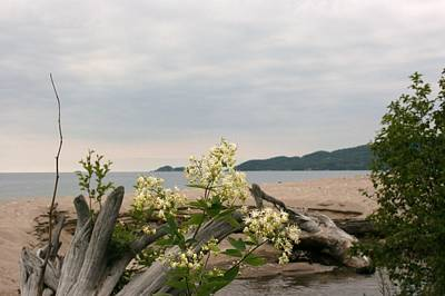 Art Print featuring the photograph Agawa Bay by Paula Brown