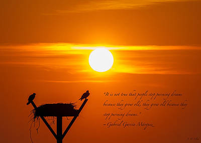 Osprey Nest Silhouette Photograph - Age And Dreams by J H Clery