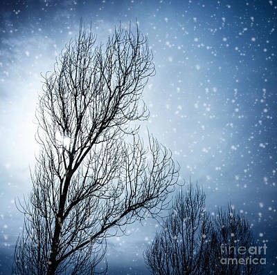 Snowy Night Photograph - Aged Tree In Winter by Anna Om