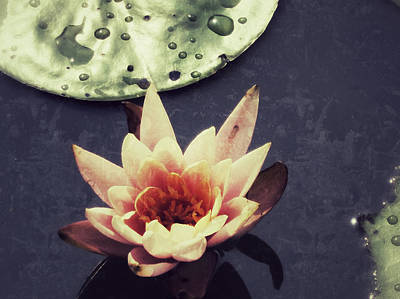 Photograph - Aged Waterlily by Patricia Januszkiewicz