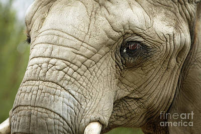 Ageless Beauty Of The Animal Kingdom Art Print by Inspired Nature Photography Fine Art Photography