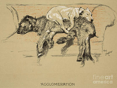 Puppies Drawing - Agglomeration by Cecil Charles Windsor Aldin
