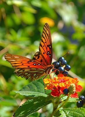 Photograph - Agraulis Vanillae-gulf Fritillary Butterfly by Jeff at JSJ Photography