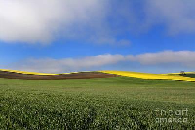 Green Color Photograph - Agricultural Landscape. Auvergne. France. by Bernard Jaubert