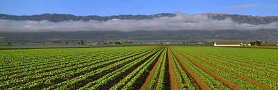 Lettuce Photograph - Agriculture - A Mid Growth Green Leaf by Timothy Hearsum