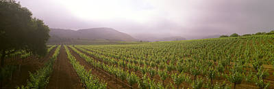 Agriculture - A Wine Grape Vineyard Art Print