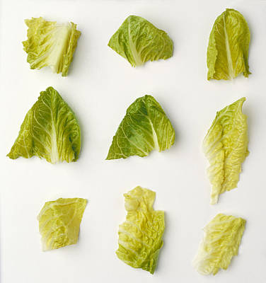 Romaine Lettuce Photograph - Agriculture - Closeup Of Chopped by Ed Young