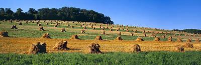 Contour Farming Photograph - Agriculture - Contour Strips by Timothy Hearsum