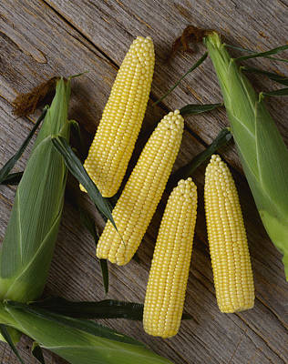 Agriculture - Ears Of Sweet Yellow Corn Art Print by Ed Young