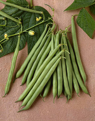 Agriculture - Green Beans On Stone Art Print by Ed Young