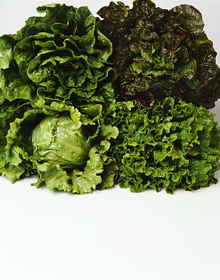 Romaine Lettuce Photograph - Agriculture - Heads Of Romaine, Red by Ed Young