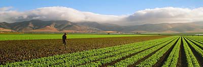 Lettuce Photograph - Agriculture - Mature Field by Timothy Hearsum