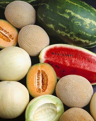 Cantaloupe Photograph - Agriculture - Mixed Melons, Watermelon by Ed Young
