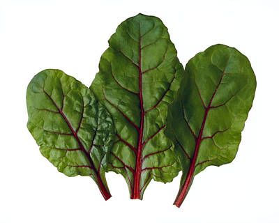 Agriculture - Red Chard Leaves Closeup Art Print by Ed Young