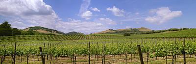 Agriculture - Rolling Hillside Wine Art Print